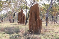 Cathedral Termite mounds.