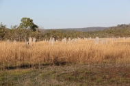 Magnetic Termite mounds.
