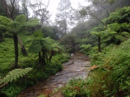 The Blue Mountains on a misty day.