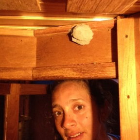 Finding another old wasp nest.